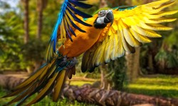 Macaw Parrot 4k