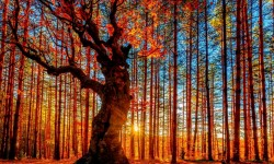 Autumn Forest Painting